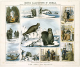 'The Seal and Walrus', c 1845.