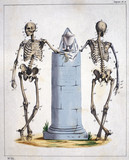 Skeletons, French, c 1815-1859.