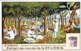 """Cocoa plantation - separation of beans from the pulp, French Liebig trade card, c 1910."""