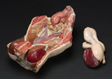 Female anatomical figures, European, 1901-1925.