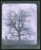 Tree in winter, mid 19th century.