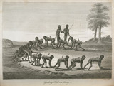 Aboriginal men imitating dogs, Australia, 1798.