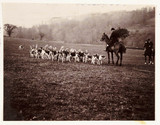 Huntsman and hounds, c 1905.