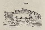 The constellation of Pisces, 1488.