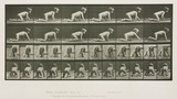 Time-lapse photographs of a child crawling, 1872-1885.