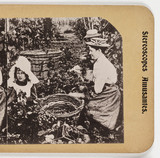 In a Kent Hop Garden', about 1900.