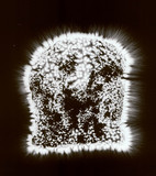 Kirlian photograph of  bread.