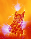 Kirlian photograph of a dress.