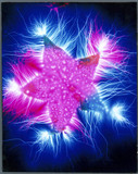 Kirlian photograph of a starfruit.