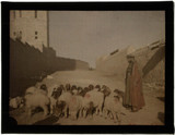 'Shepherd and Sheep, Jerusalem'.