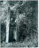 Cherry Kearton in a photographic hide, 1899.