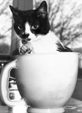 Cat in a measuring jug, March 1989.