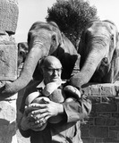 """Elephants with keeper, Chester Zoo, September 1977."""