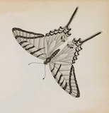 Close up Illustration of Eq.Achiv.4 Papilio butterfly