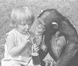 Girl and chimp sharing a drink