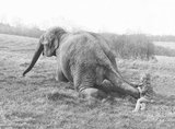 Girl trying to budge elephant