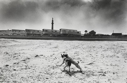 Two dogs playing together on beach, 1967.