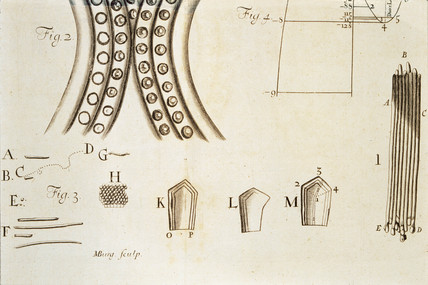 Leeuwenhoek's observations on bacteria, c 1683.