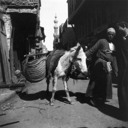 Donkey with loaded saddle-bags, Middle East, c 1910s.
