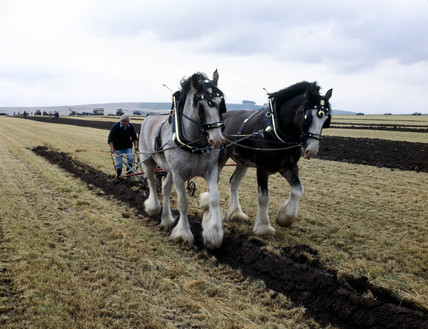 Horse ploughing, Wiltshire, c 1989.