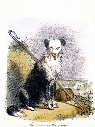 'The Shepherd's Companion', c 1845.