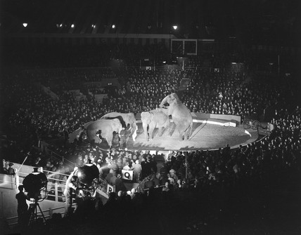 Elephants perform at Olympia, 1932.