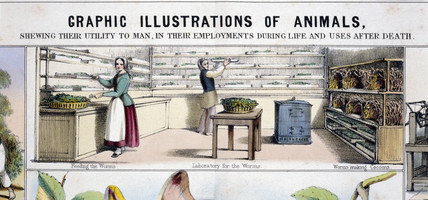'Laboratory for the worms', c 1845.