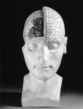Phrenological head, French.