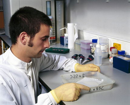 Molecular geneticist washing 'Southern blots'.