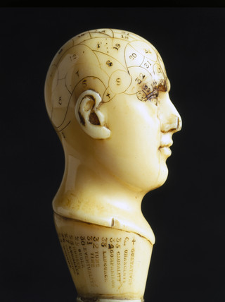Ivory phrenological head, 1850-1914.