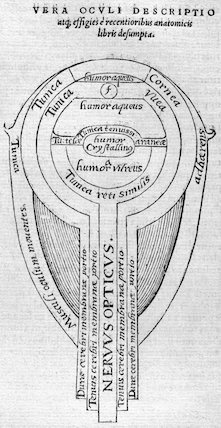 Diagram of the human eye, 1572.