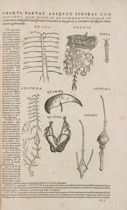 Diagrams of human organs for teaching students, 1543.