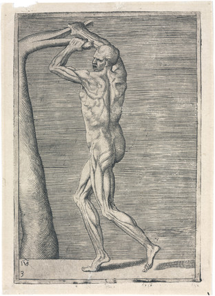 Anatomical study of male musculature; man breaking a branch, c 1555.