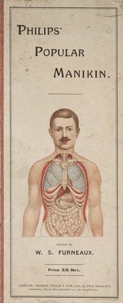 'Philips' Popular Manikin'; diagram of internal organs, late 19th early 20th century.