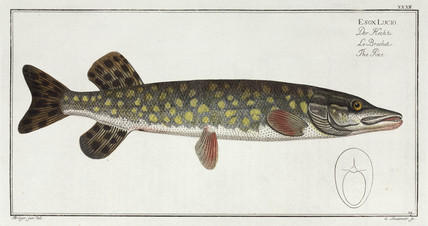 'The Pike', 1785-1788.