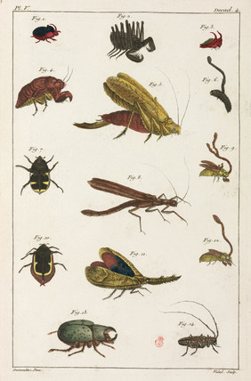 Beetles and other insects, South America, 1775-1781.