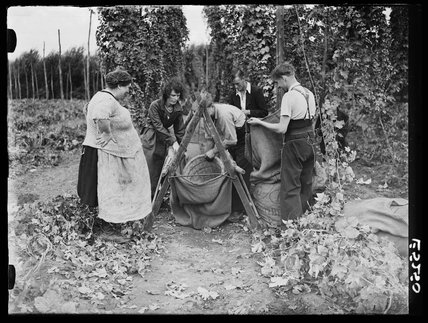 Hop picking, 1935.