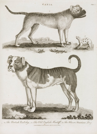 Three types of dog, 1800.