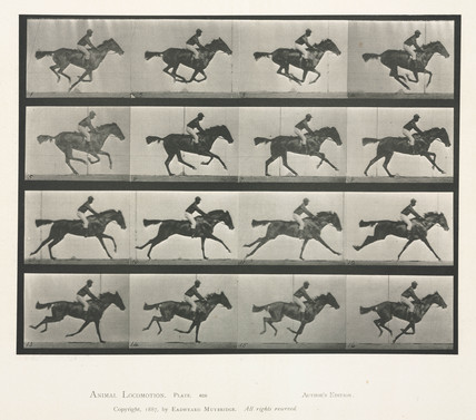 Time-lapse photographs of a man riding a galloping horse, 1872-1885.