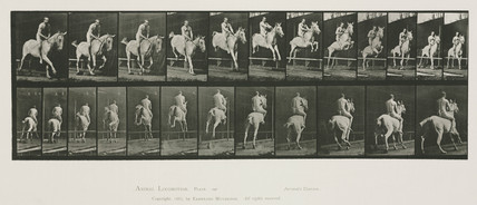 Time-lapse photographs of a rider taking a horse over a jump, 1872-1885.
