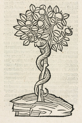 The serpent in the tree of knowledge, 1497.