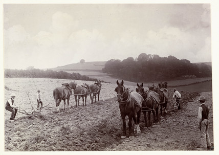 Horses ploughing, c 1890.