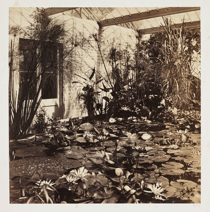 Lily pond and hothouse, c 1859.