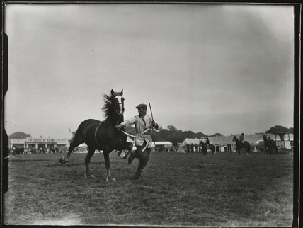 Mathrafal, the champion Welsh cob stallion, July 1952.
