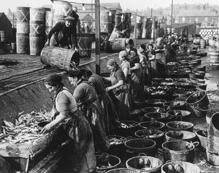 Gutting and cleansing herring at the quayside.