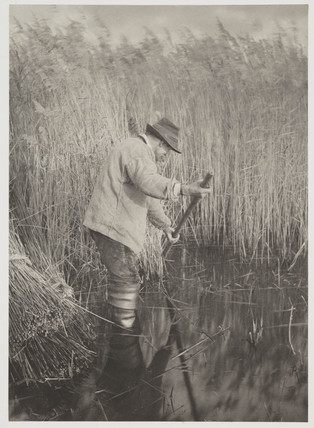 'A Reed-Cutter at Work', 1886.