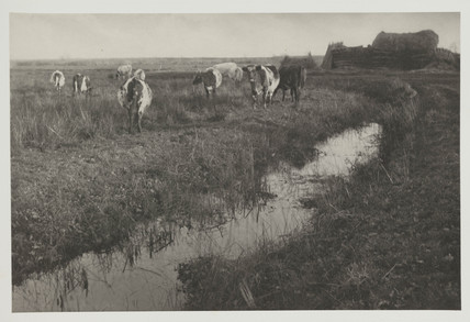 'Cattle on the Marshes', 1886.