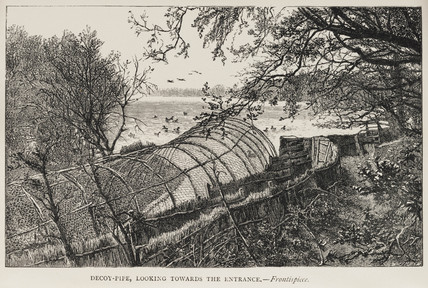 'Decoy-Pipe, Looking Towards The Entrance', 1884.