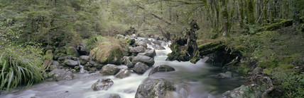 Stream, Lower Travers Valley, New Zealand, 1996.