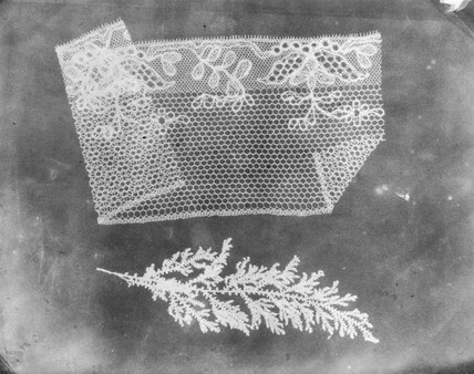 'Folded lace and botanical specimen', 1839.